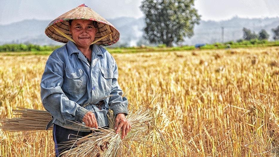 Ben's Original Website Growing Rice