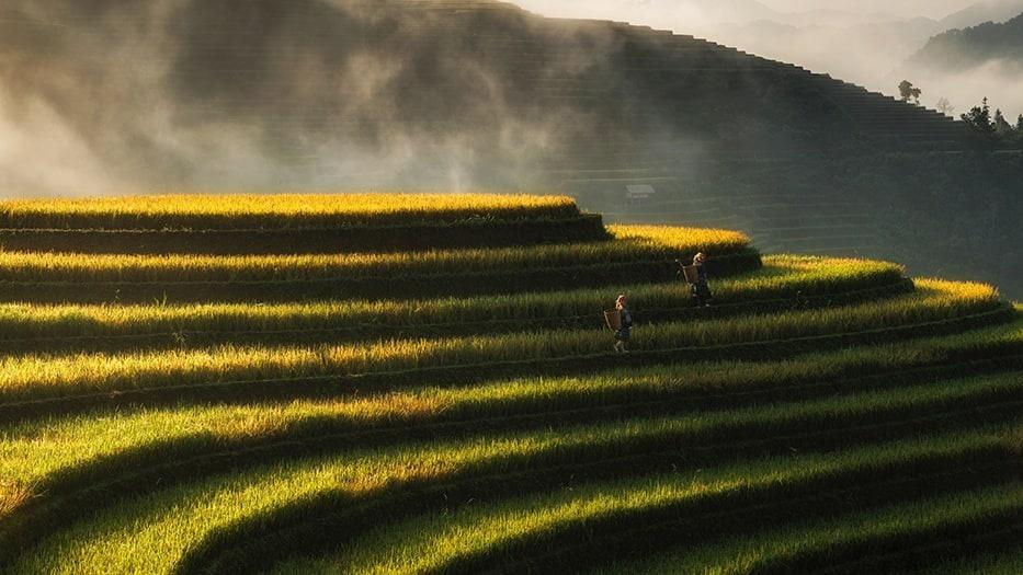 Ben's Original German Website Rice Growing Freeform Block