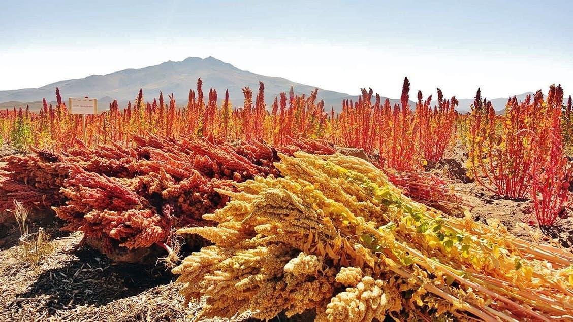 Ben's Original Website Quinoa Mountains