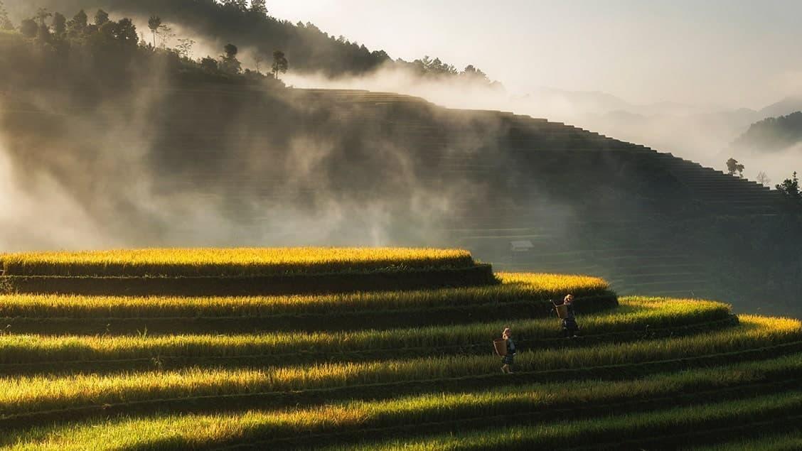 Ben's Original German Website Rice Growing Full Image