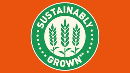 Sustainable Rice Growing | Ben's Original™